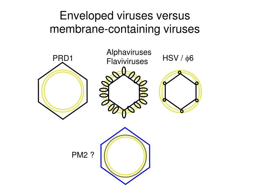 Enveloped viruses versus