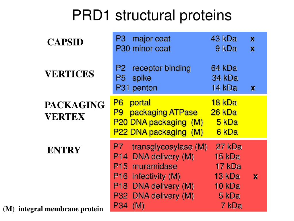 PRD1 structural proteins