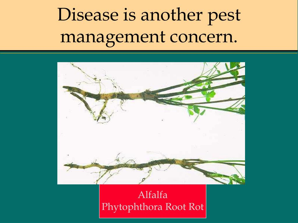 Disease is another pest management concern.