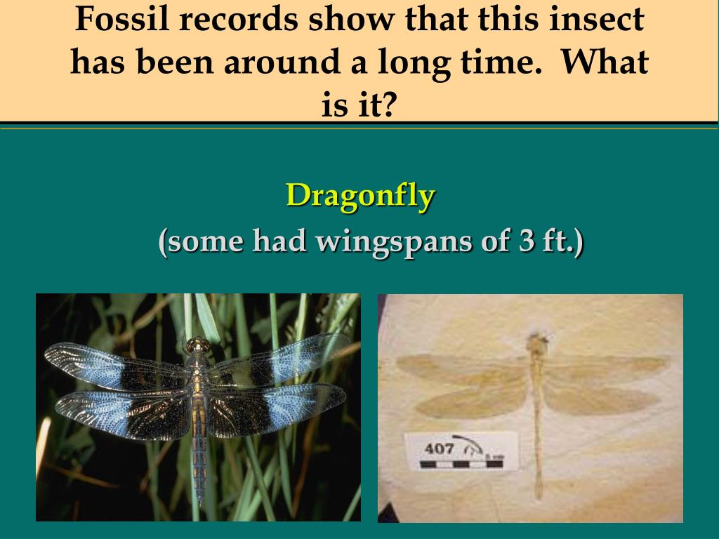 Fossil records show that this insect has been around a long time.  What is it?