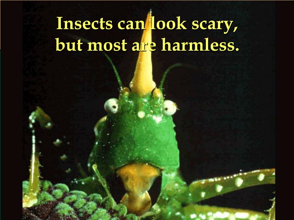 Insects can look scary,