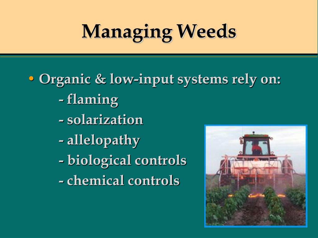 Managing Weeds