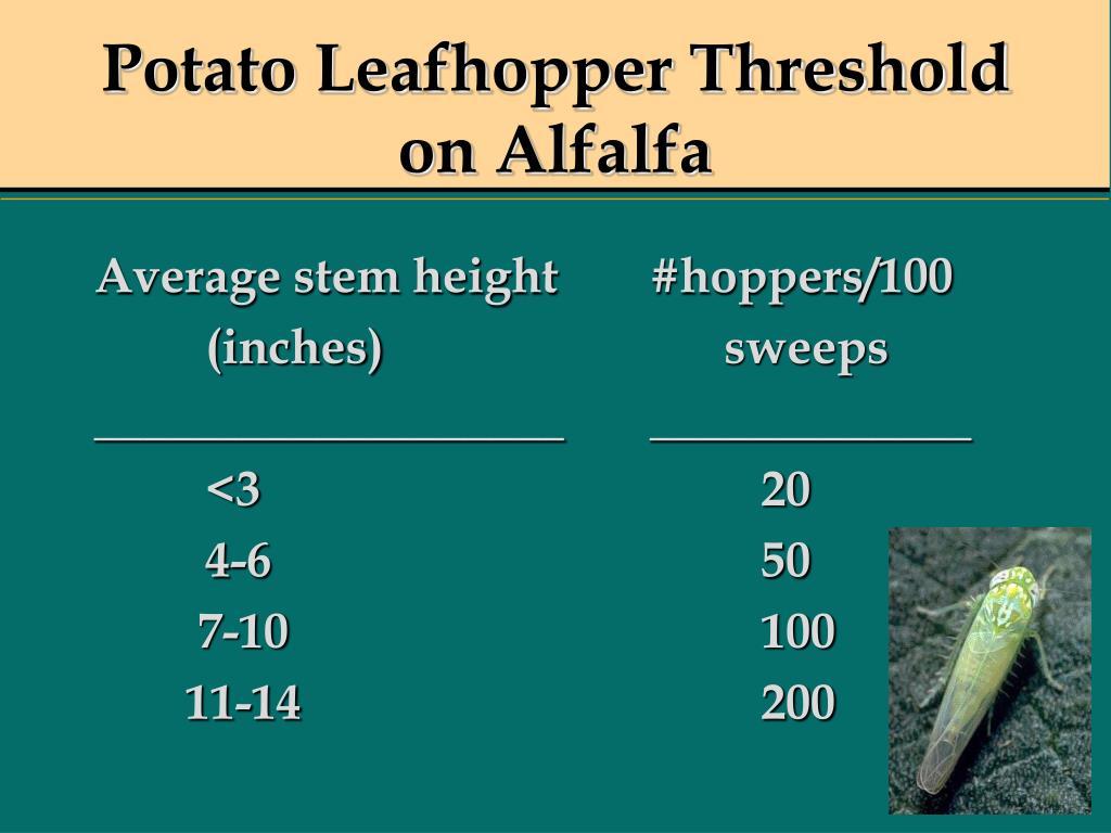 Potato Leafhopper Threshold on Alfalfa