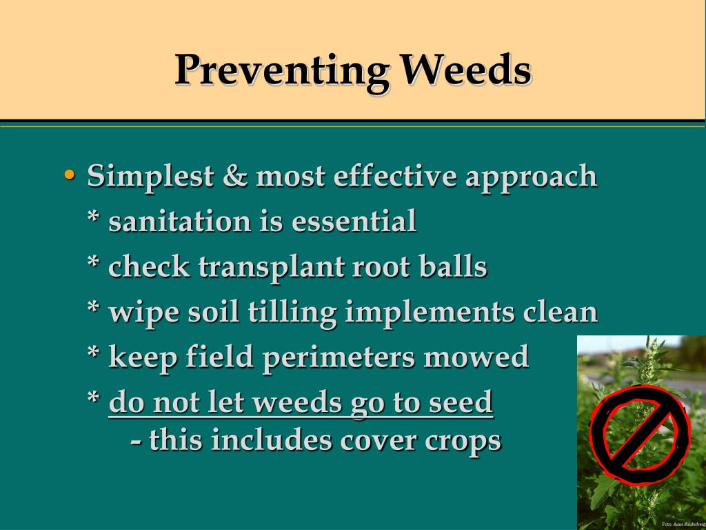 Preventing Weeds