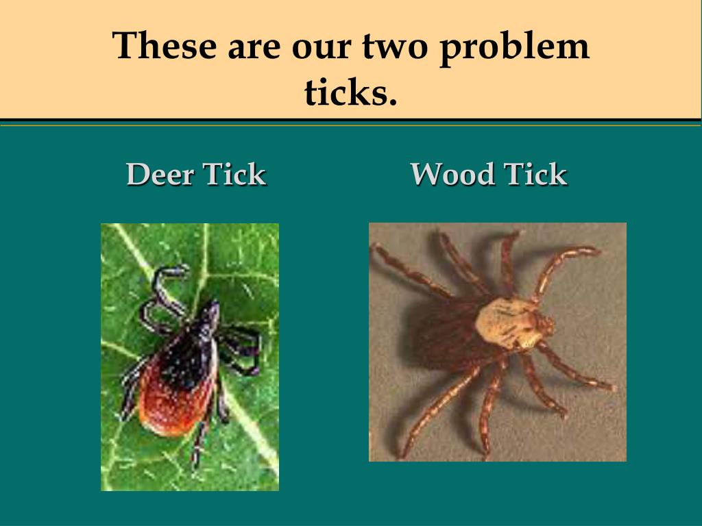 These are our two problem ticks.