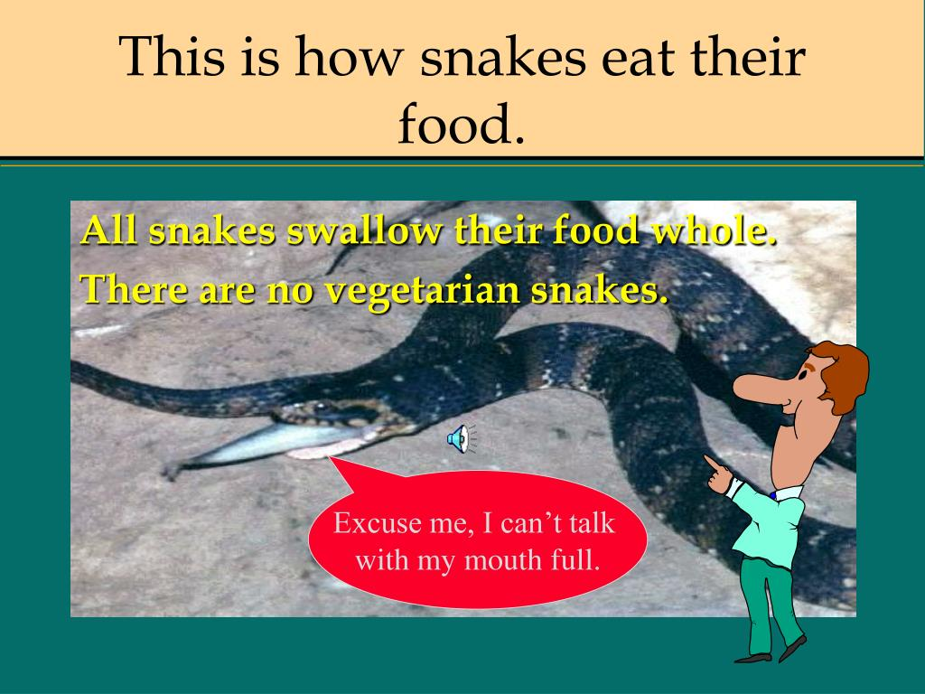 This is how snakes eat their food.