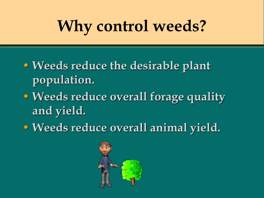 Why control weeds?