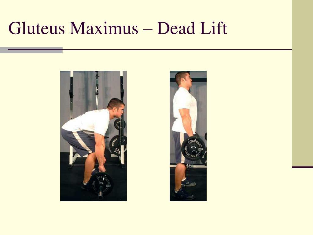 Gluteus Maximus – Dead Lift
