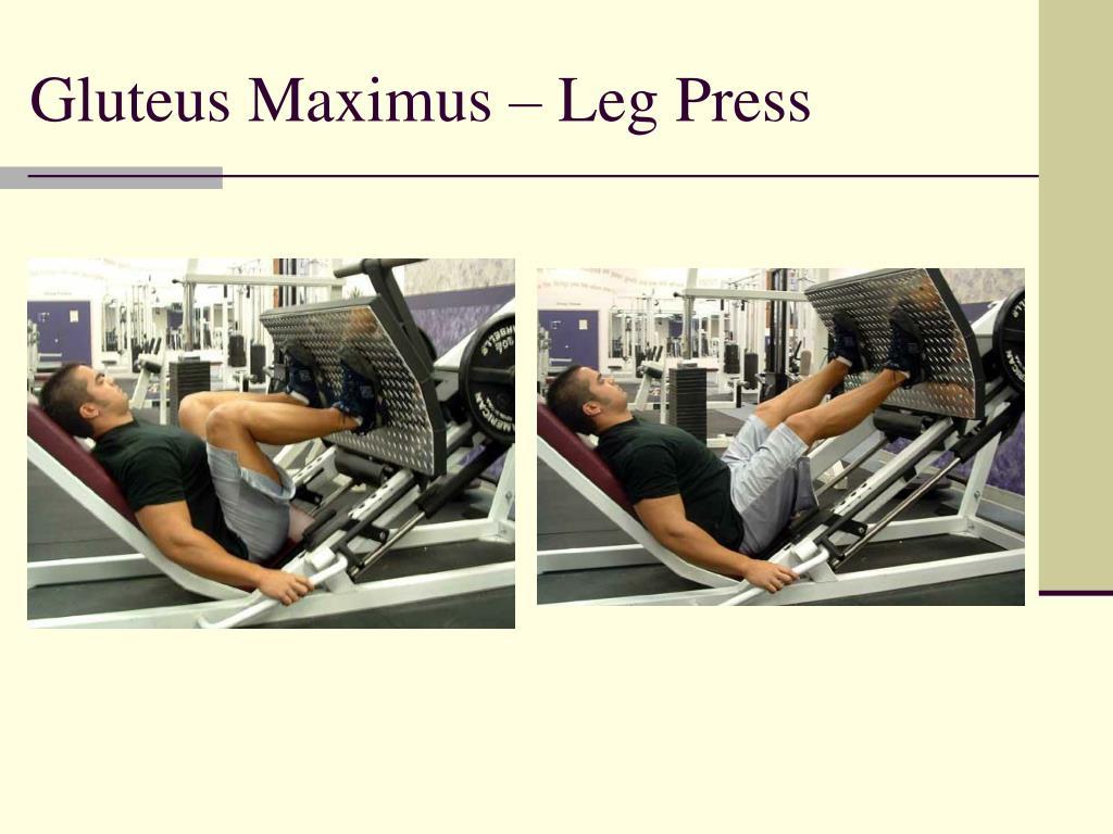 Gluteus Maximus – Leg Press