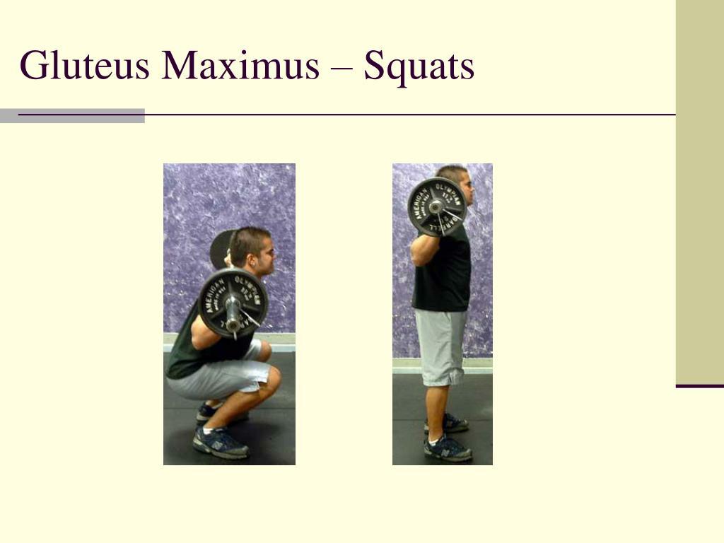 Gluteus Maximus – Squats