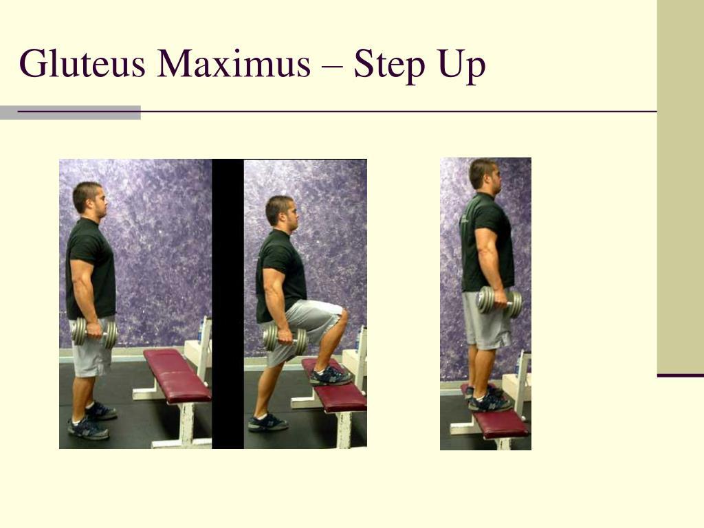 Gluteus Maximus – Step Up