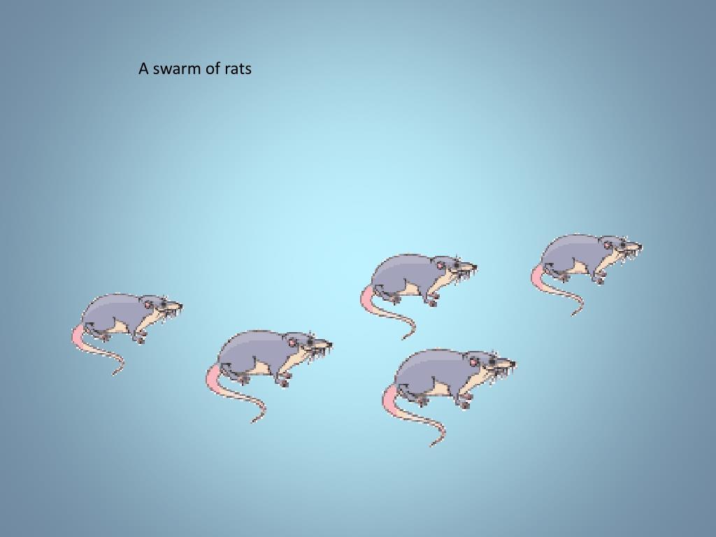 A swarm of rats