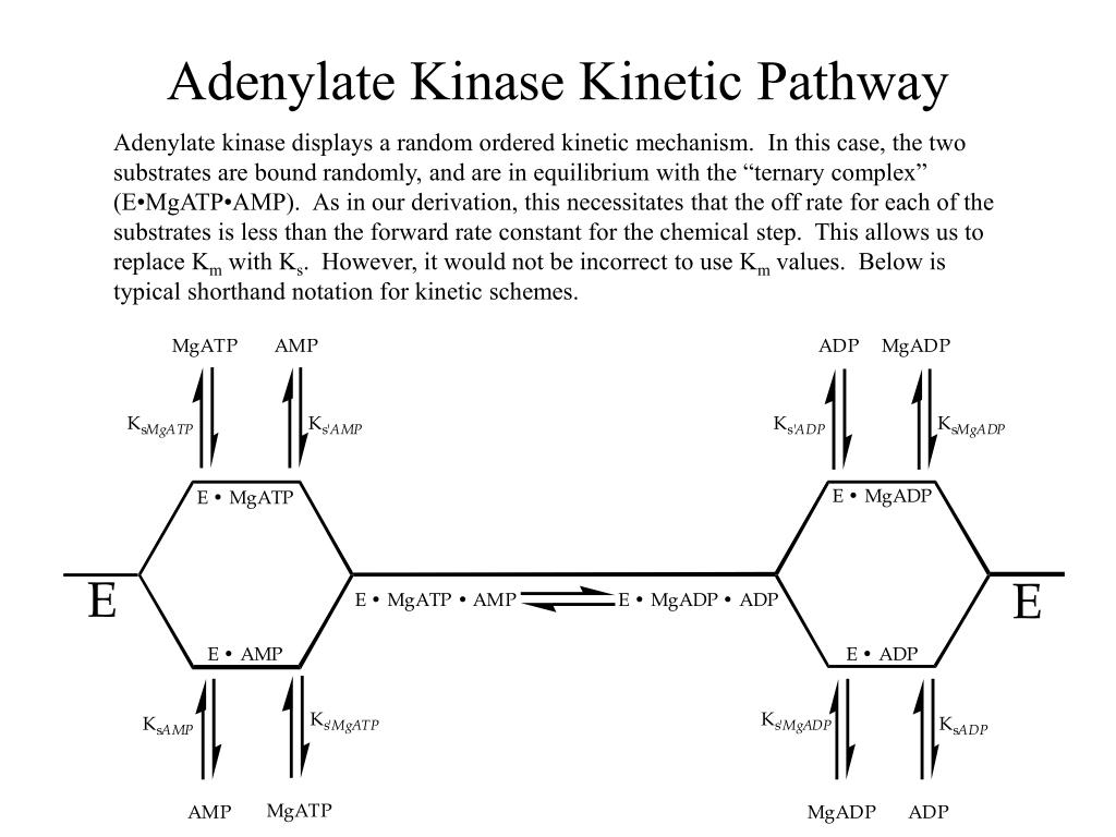 Adenylate Kinase Kinetic Pathway