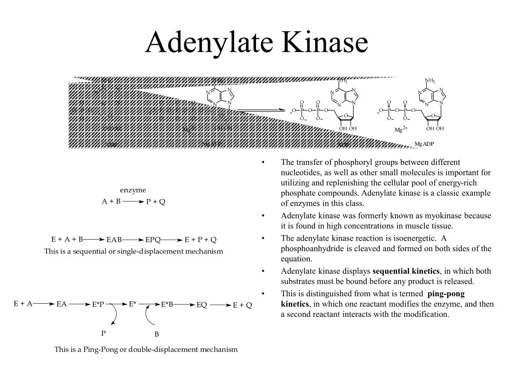 Adenylate Kinase