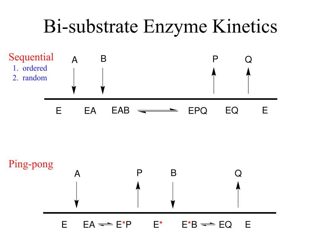 Bi-substrate Enzyme Kinetics