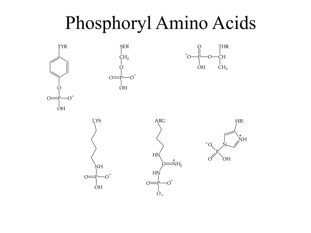 Phosphoryl Amino Acids