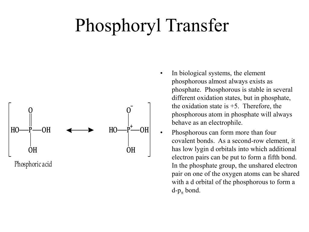 Phosphoryl Transfer