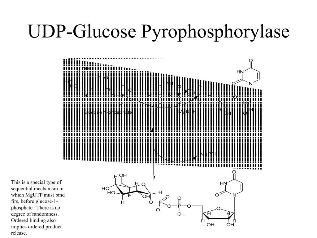 UDP-Glucose Pyrophosphorylase