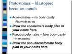 protostomes blastopore becomes mouth