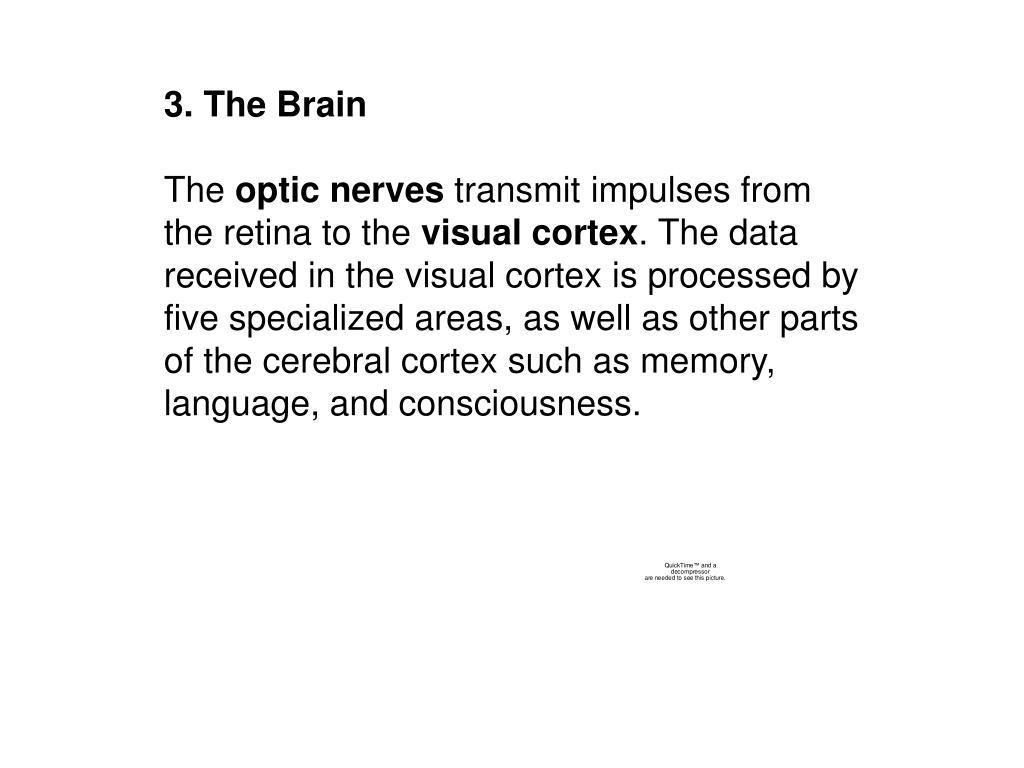 3. The Brain