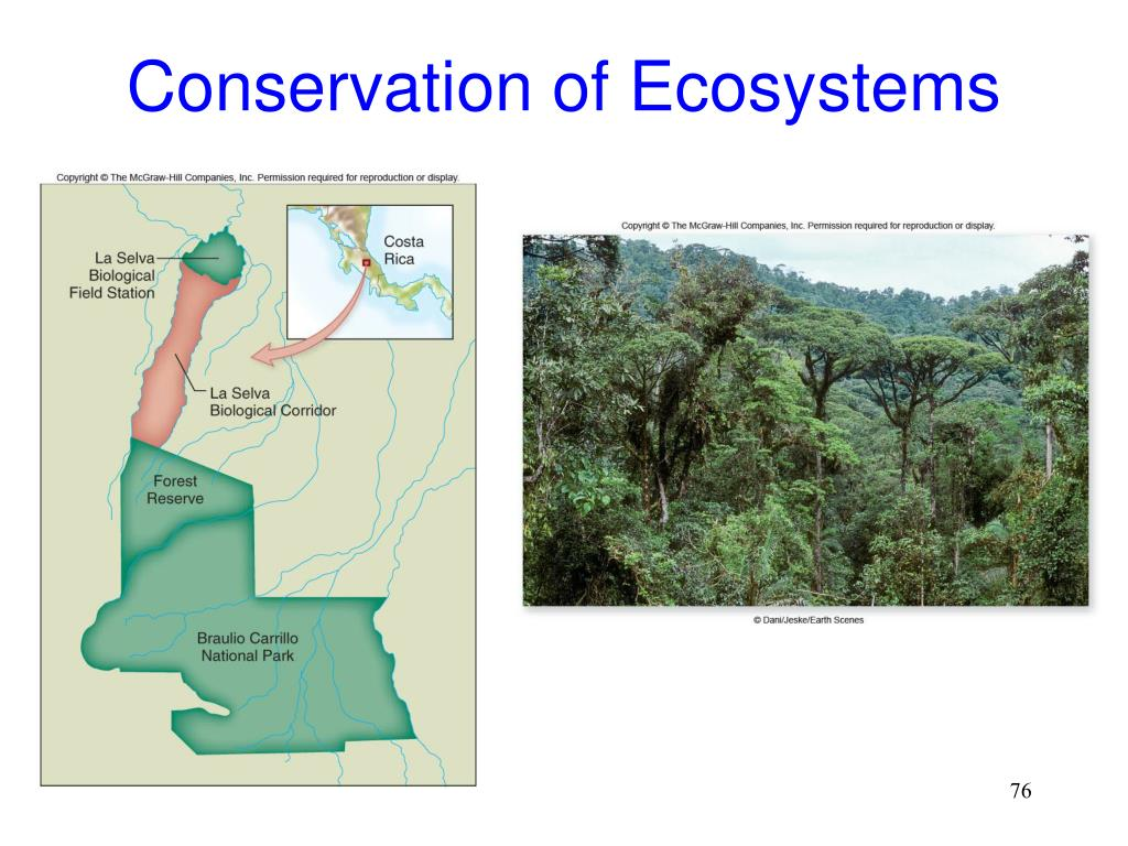 Conservation of Ecosystems