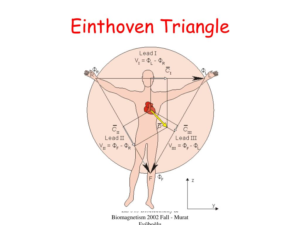 Einthoven Triangle