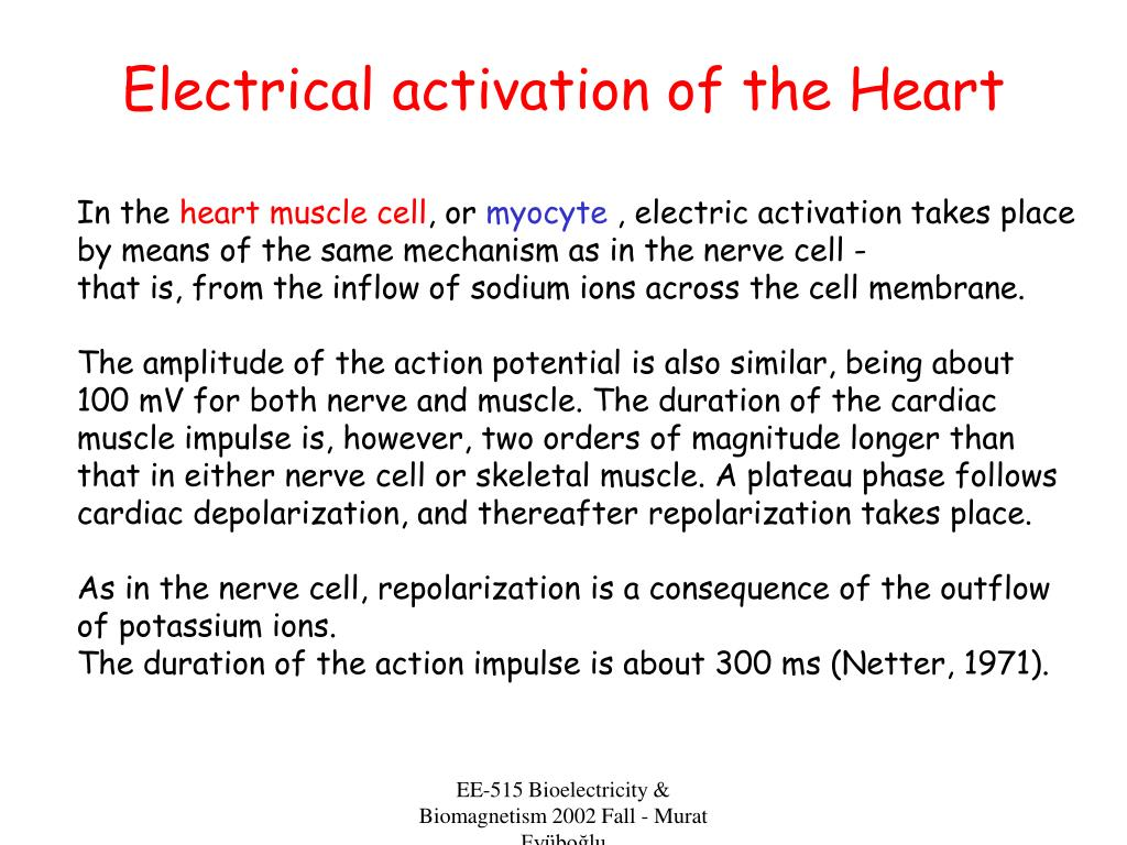 Electrical activation of the Heart