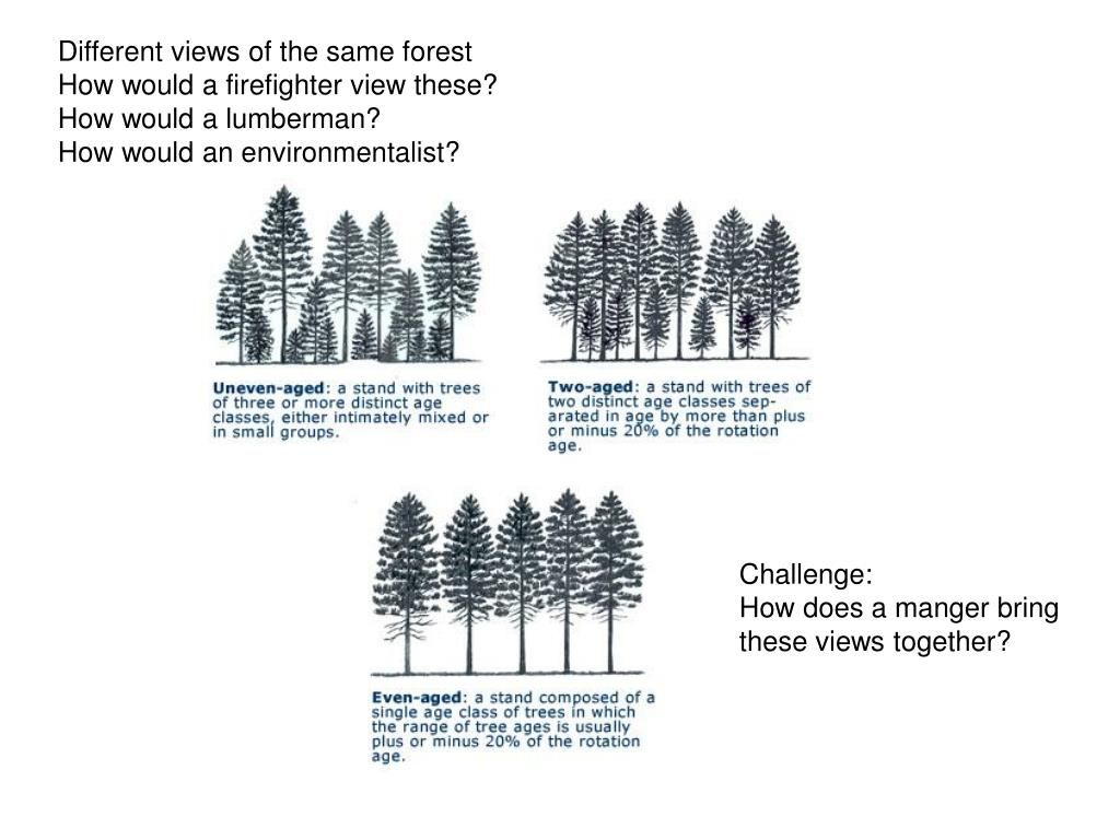 Different views of the same forest