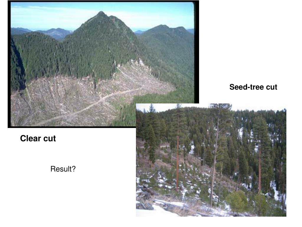 Seed-tree cut