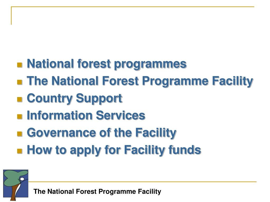 National forest programmes