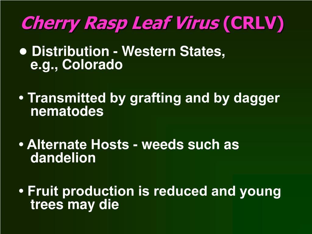 Cherry Rasp Leaf Virus
