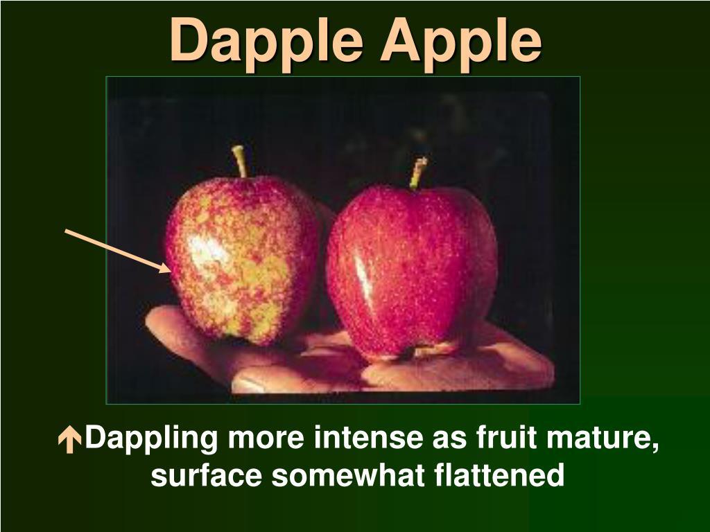 Dapple Apple