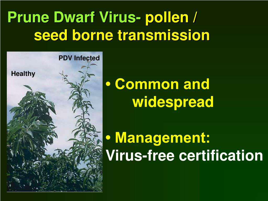 Prune Dwarf Virus-