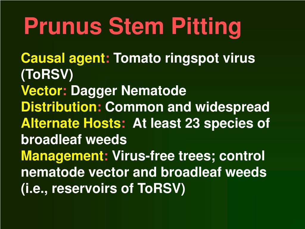 Prunus Stem Pitting