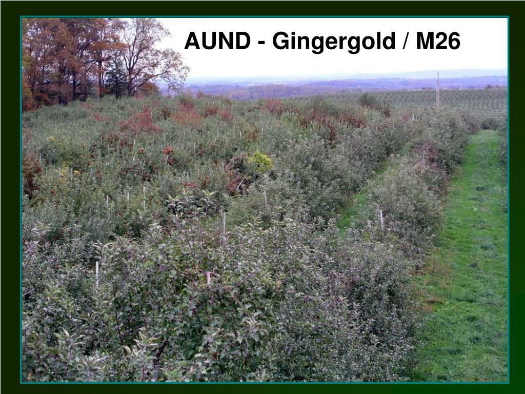 AUND - Gingergold / M26