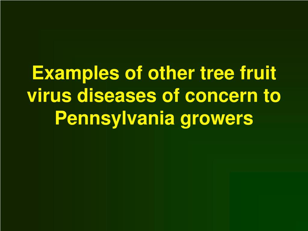 Examples of other tree fruit virus diseases of concern to Pennsylvania growers
