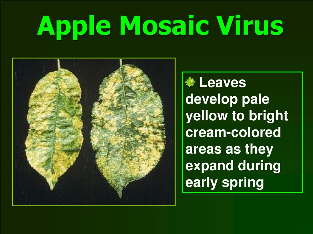Apple Mosaic Virus