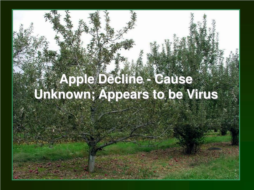 Apple Decline - Cause Unknown; Appears to be Virus