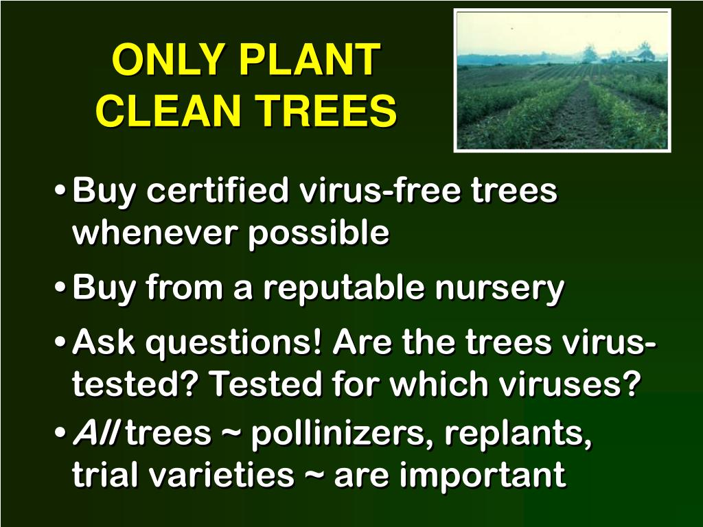 ONLY PLANT CLEAN TREES