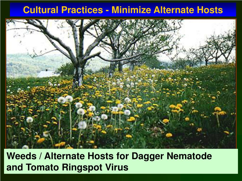 Cultural Practices - Minimize Alternate Hosts