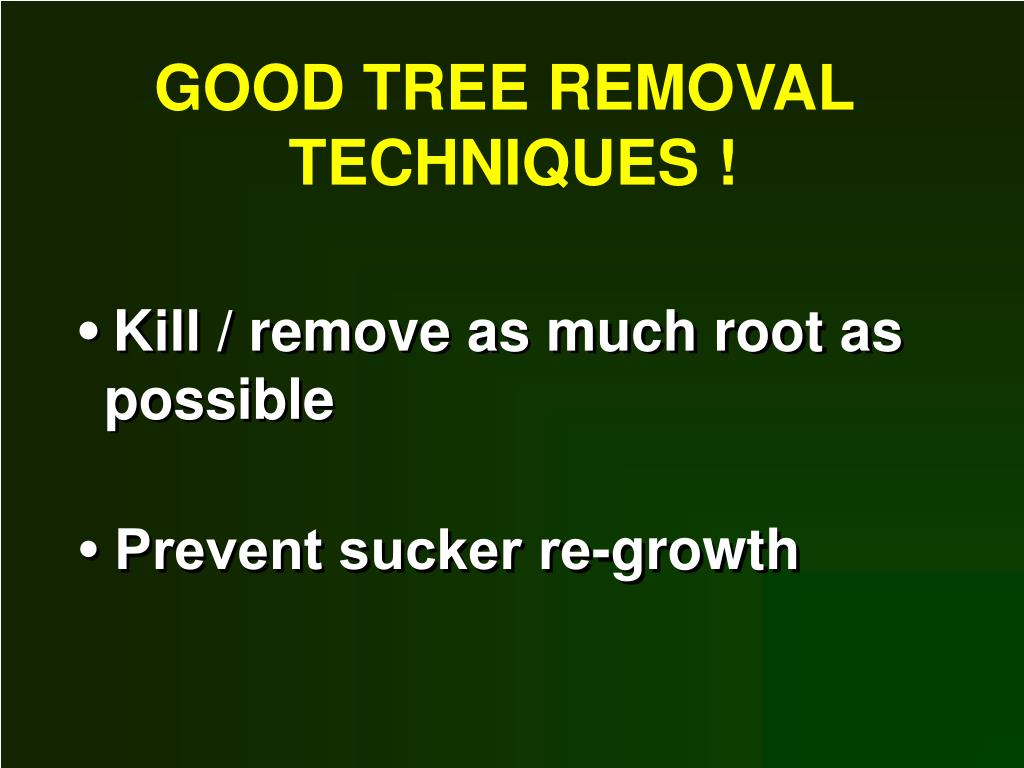 GOOD TREE REMOVAL