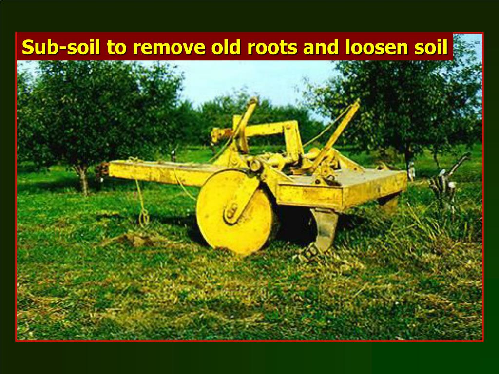 Sub-soil to remove old roots and loosen soil