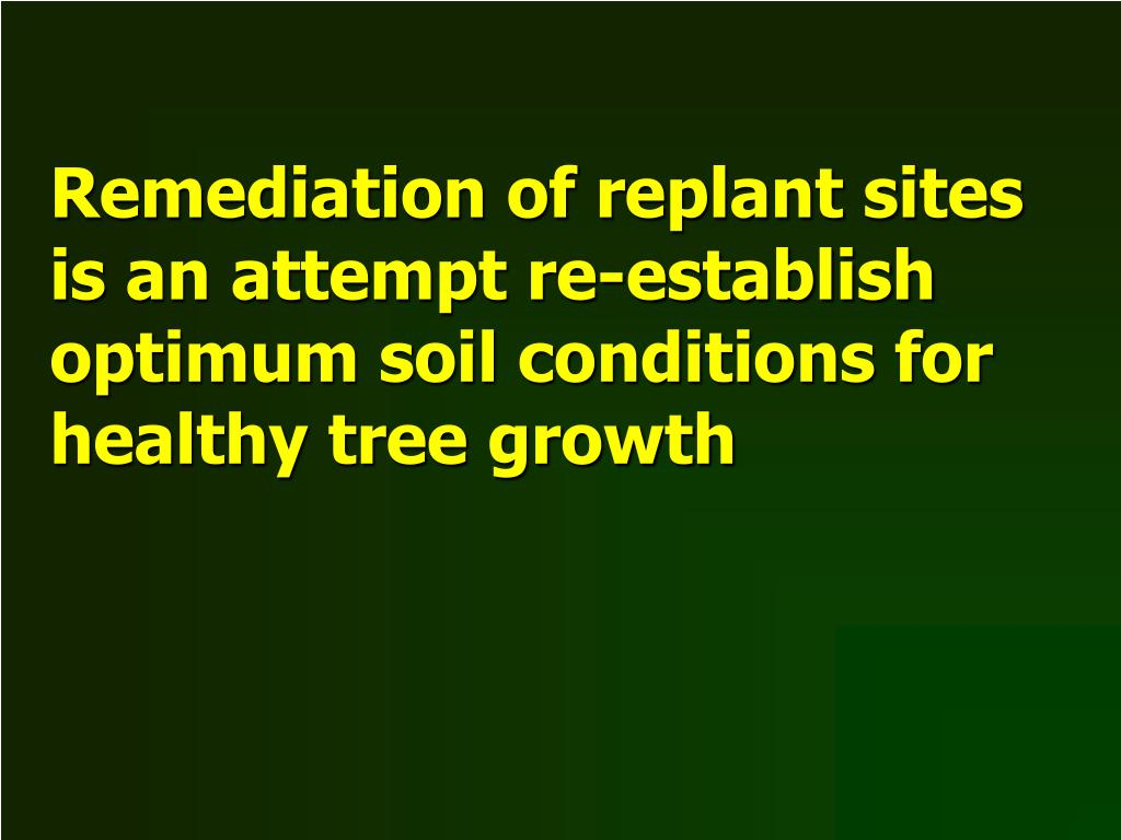 Remediation of replant sites is an attempt re-establish optimum soil conditions for healthy tree growth