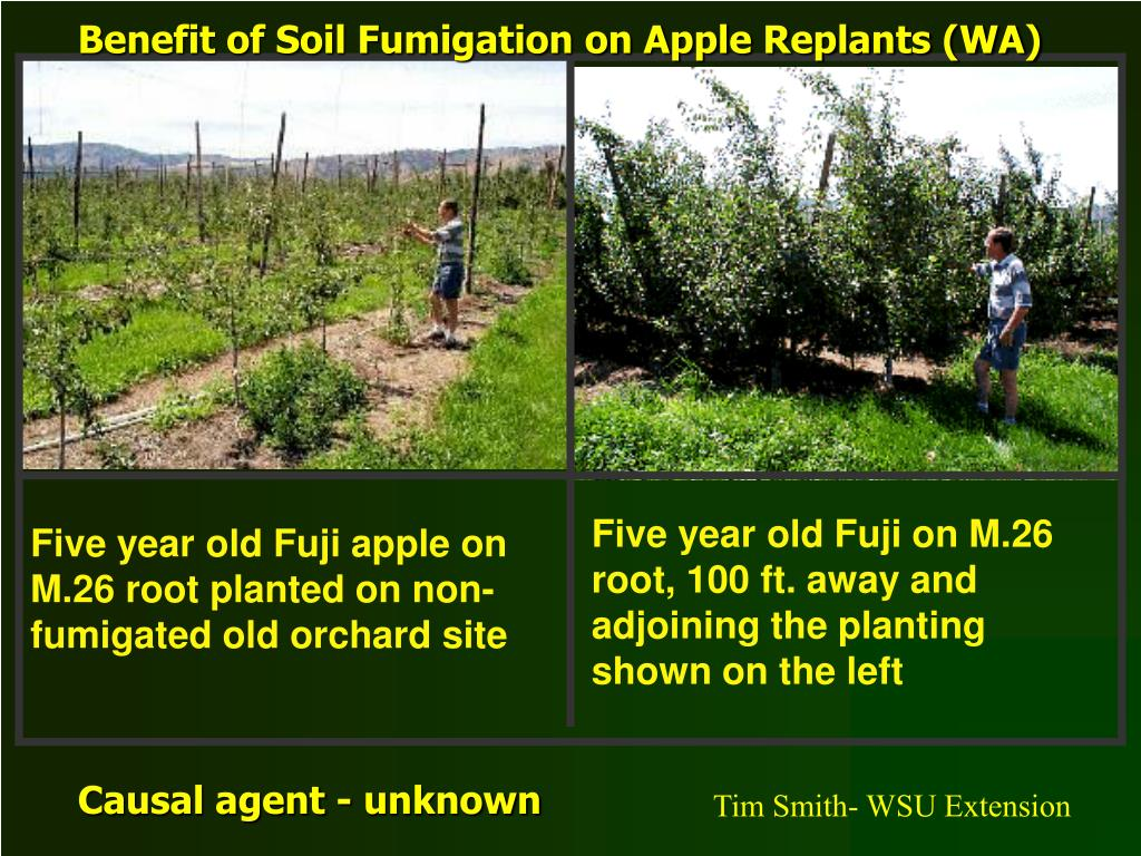 Benefit of Soil Fumigation on Apple Replants (WA)