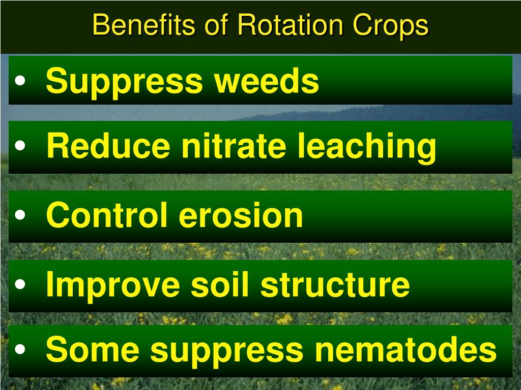Benefits of Rotation Crops