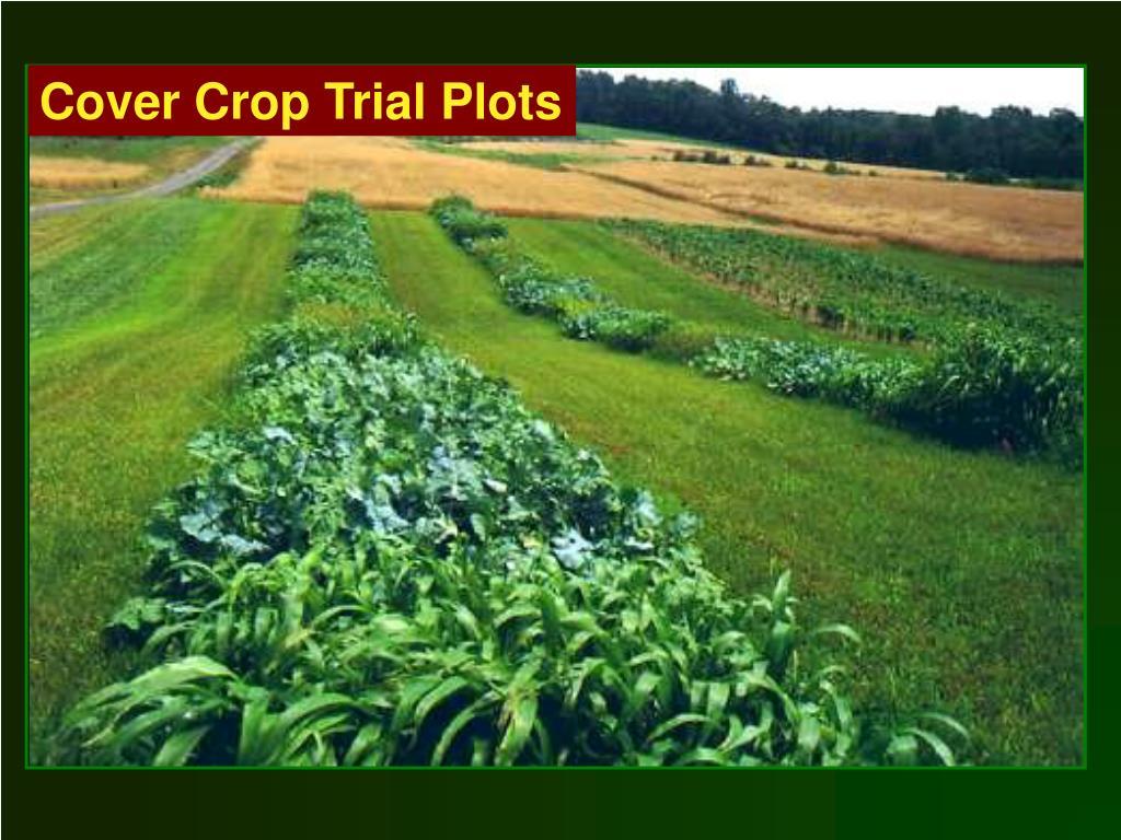Cover Crop Trial Plots