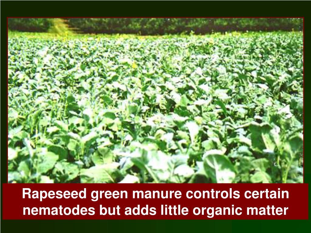 Rapeseed green manure controls certain nematodes but adds little organic matter