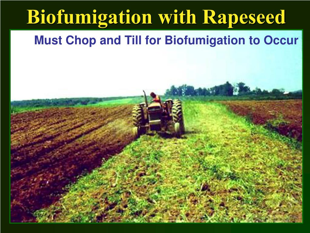 Biofumigation with Rapeseed