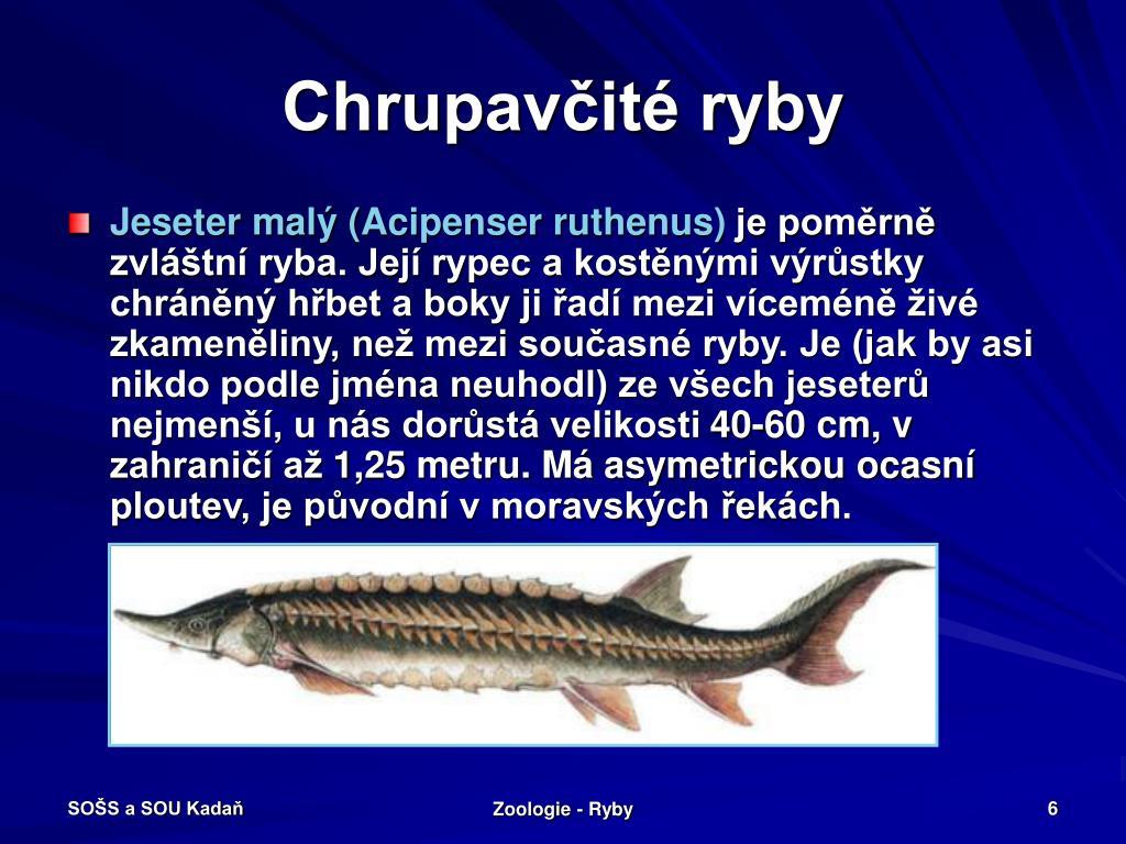 Chrupavčité ryby