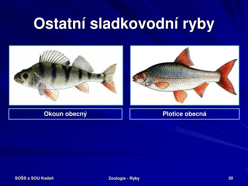 Ostatní sladkovodní ryby